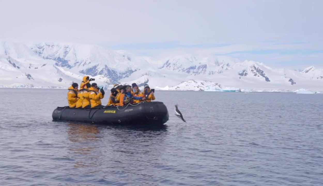 A turisták csónakjára menekült egy pingvin a kardszárnyú delfinek elől