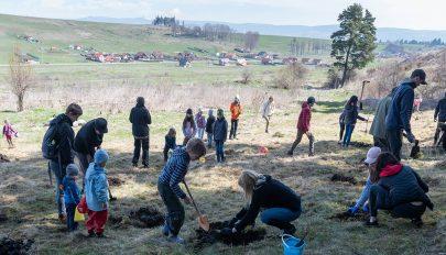 Ezerötszáz csemetét ültettek a természetbarátok