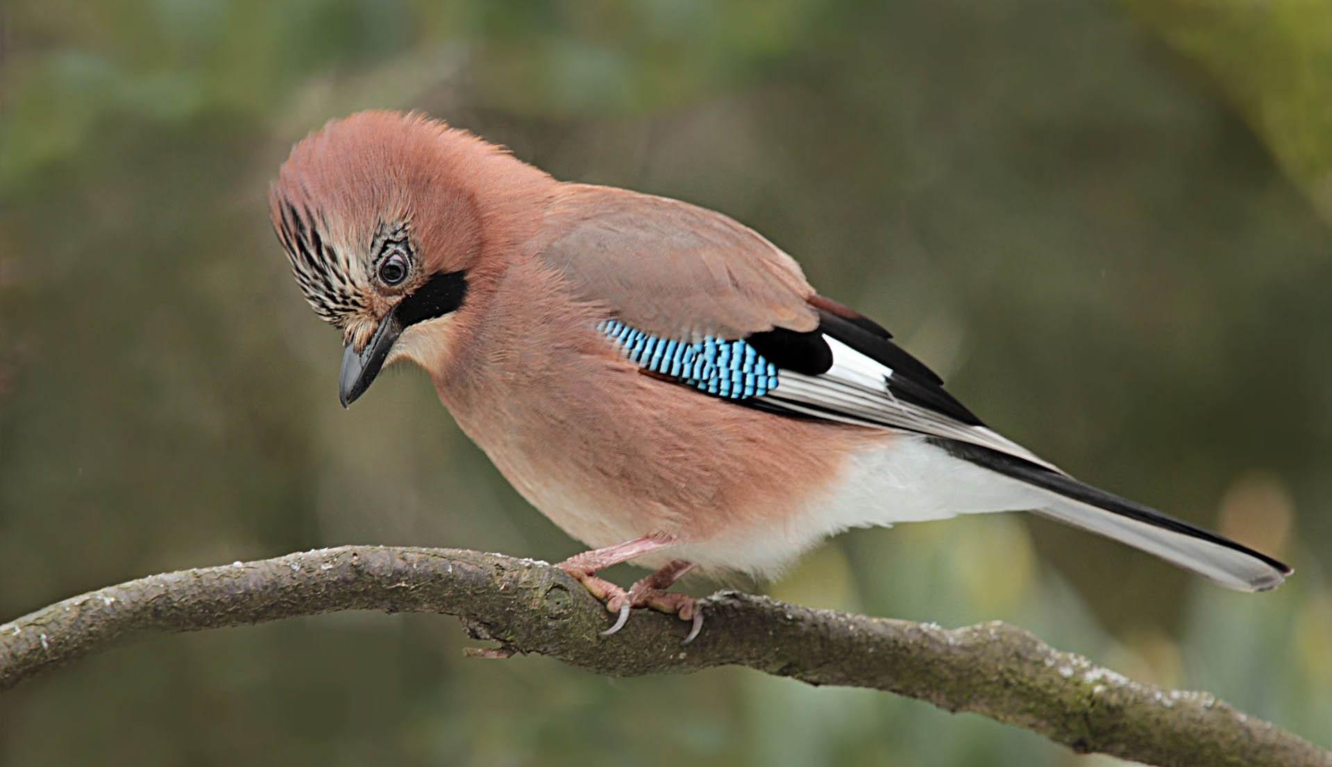 Vészjelző madárhangok