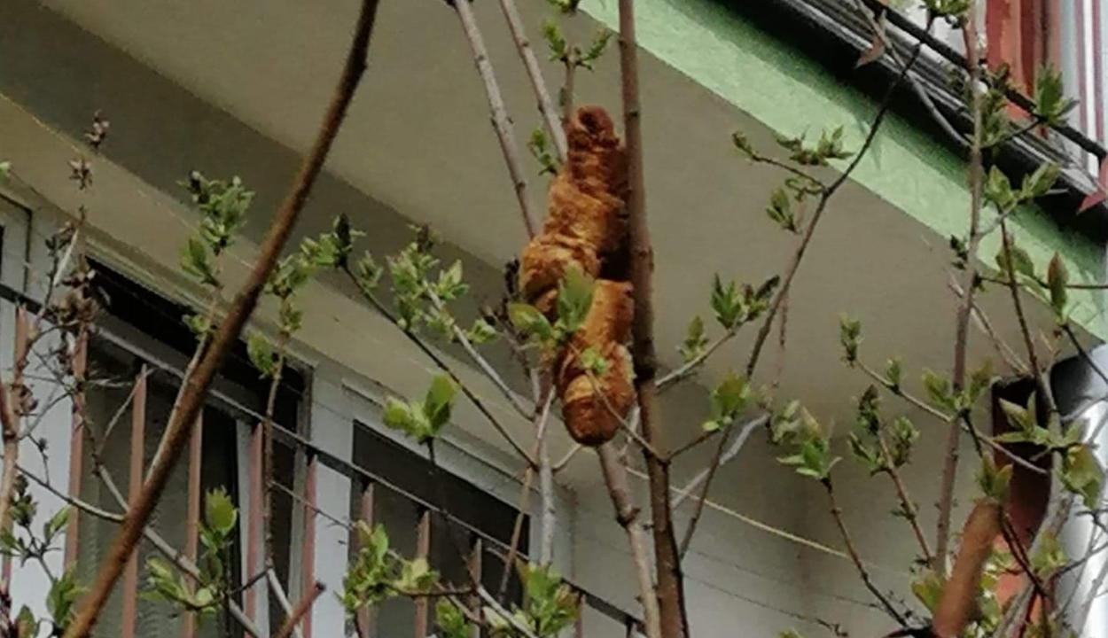 Veszélyes vadállatnak néztek egy fán ragadt péksüteményt Krakkóban