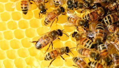 De minimis támogatásban részesülhetnek a méhészek