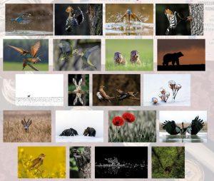 A Transnatura által benevezett 20 fotó