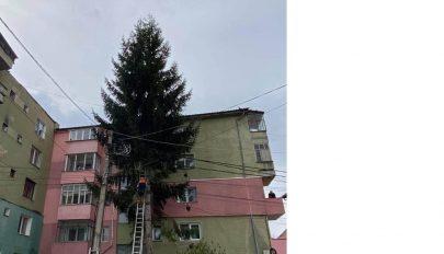 Kivágták a magas fákat