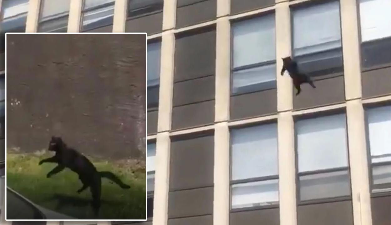 Öt emeletnyi magasból ugrott ki egy lakástűzből menekülő macska
