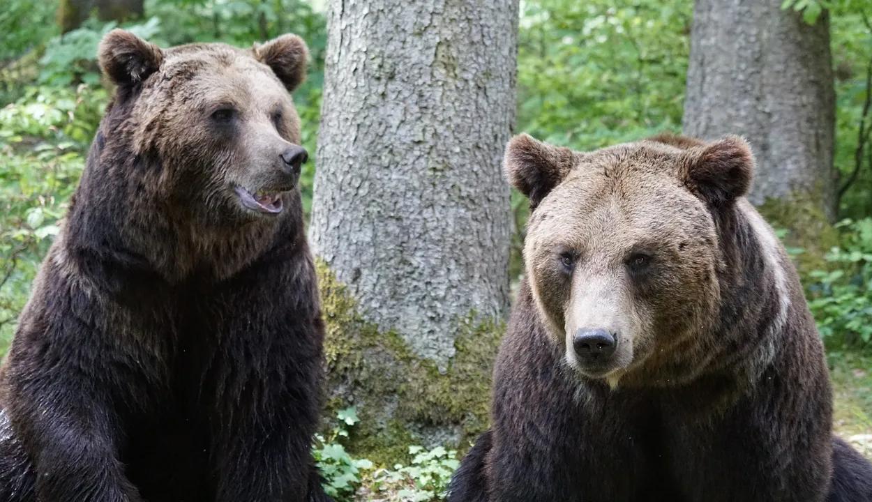 Csendőrök bírságoltak meg egy medvéket etető turistát a Transzfogarason