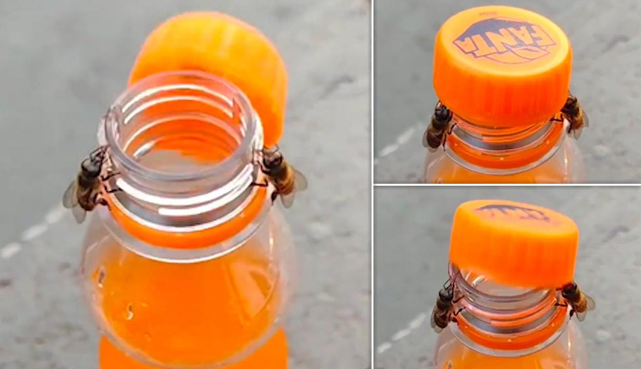 Videón, ahogy két méhecske profi csapatmunkával kinyit egy üdítős üveget