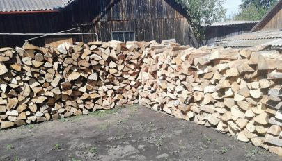 A faárak az égig nőnek