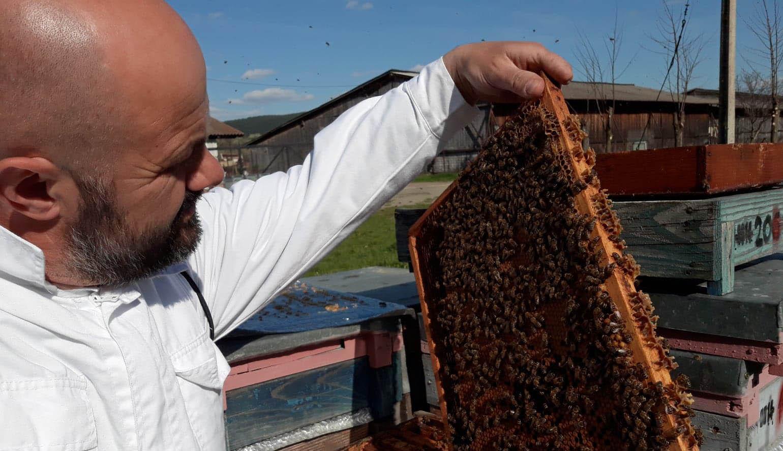 A méhészek is szenvednek