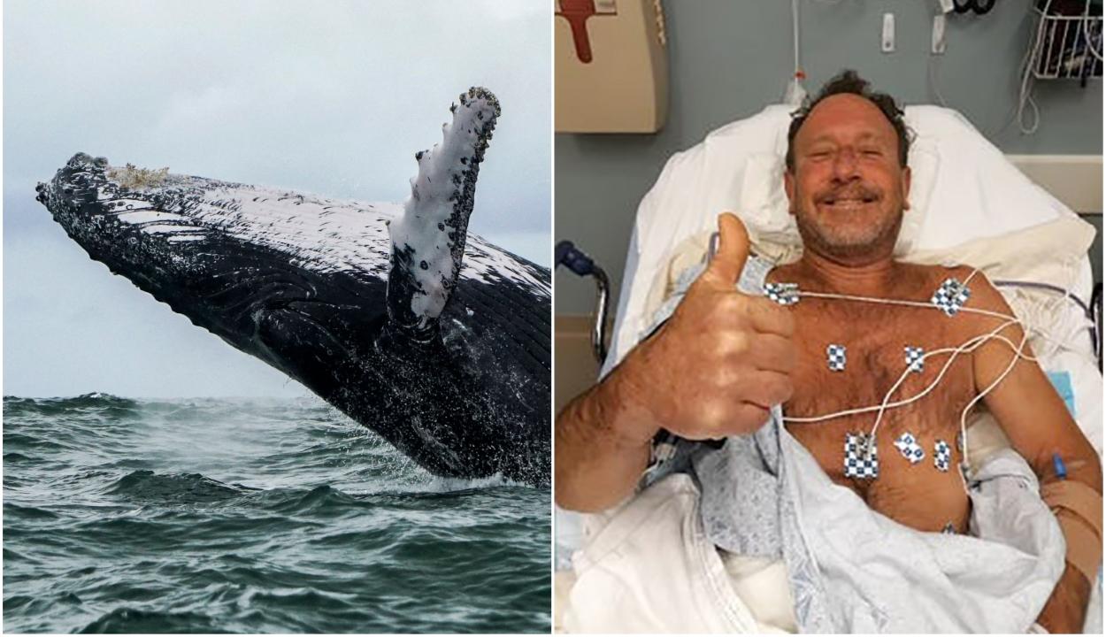 Bekapta egy bálna a búvárt