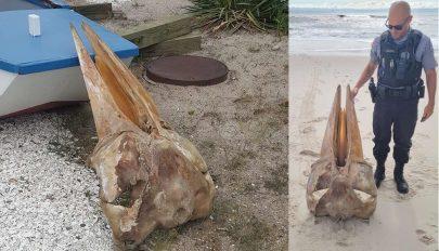 Óriási lény koponyája vetődött partra az Egyesült Államokban