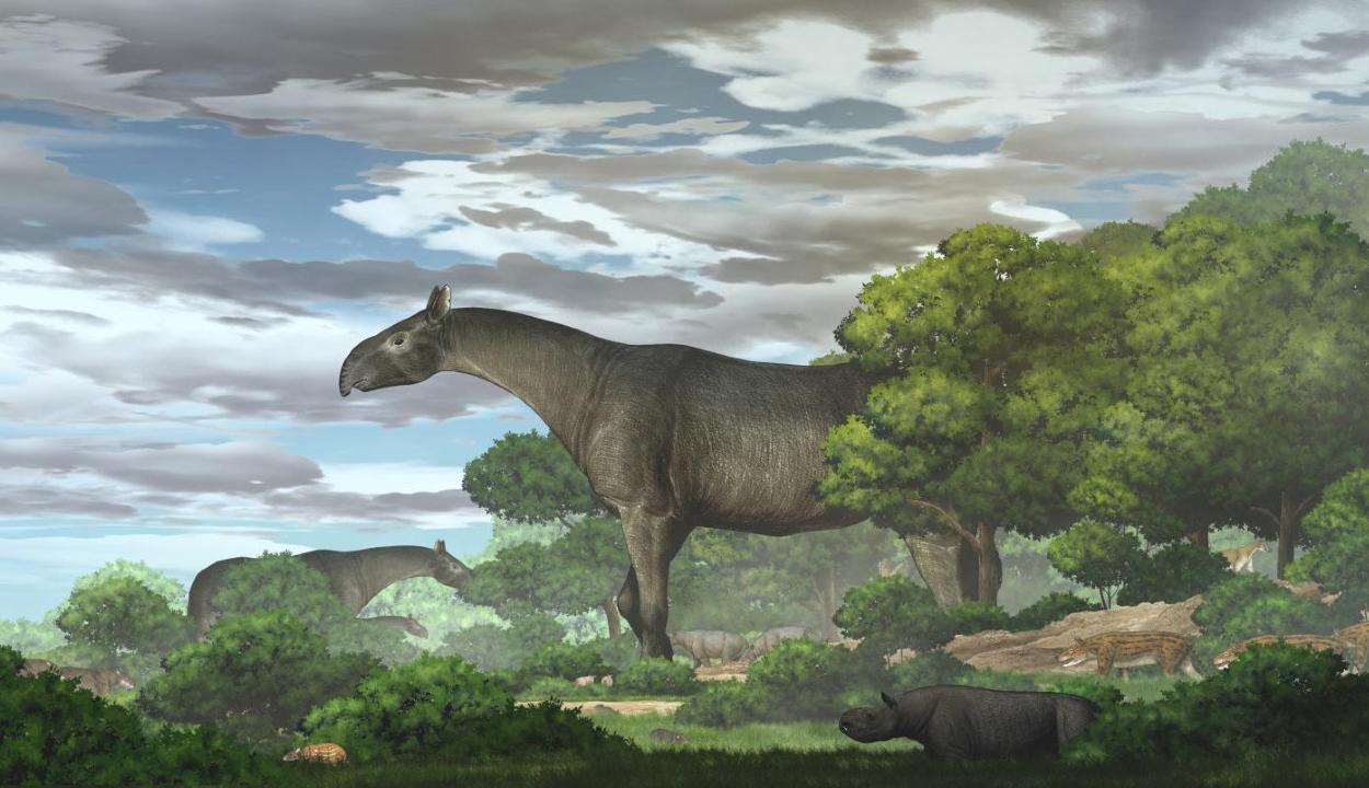 Megtalálták minden idők legnagyobb szárazföldi emlősét