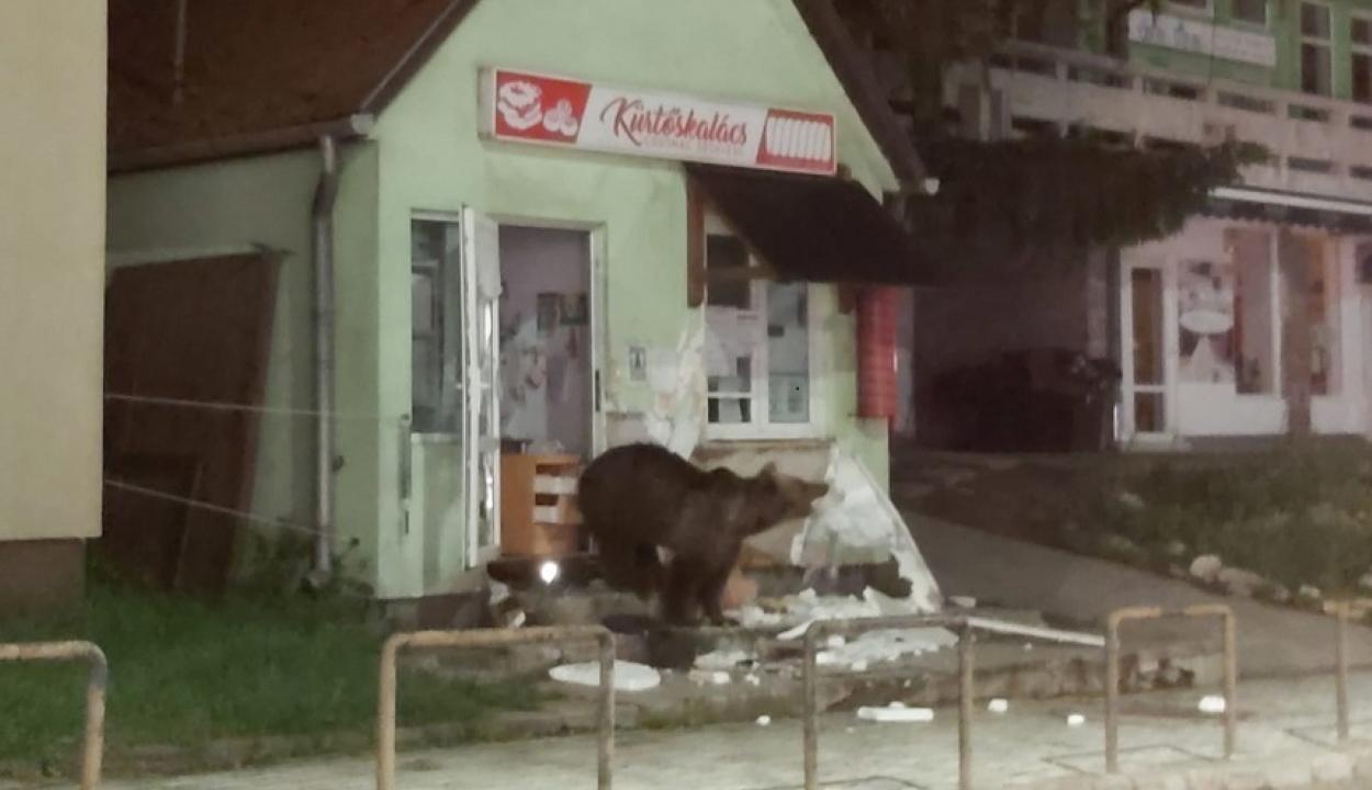 Boltba és panzióba törtek be a medvék Tusnádfürdőn
