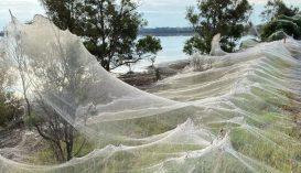Pókok terrorizálnak egy ausztrál kisvárost