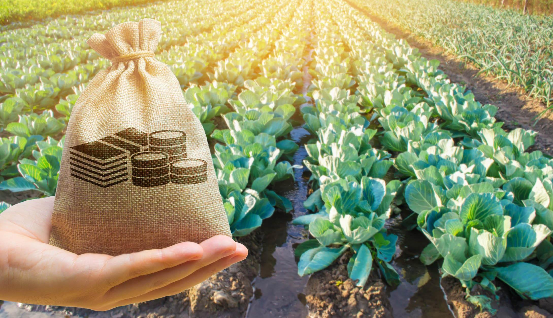 230 millió eurónyi mezőgazdasági támogatásra pályázhatnak a romániai gazdák