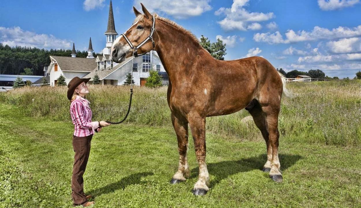 Elpusztult Big Jake, a világ legmagasabb lova