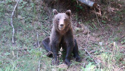 """""""Mit tegyünk a befogott medvékkel?"""""""