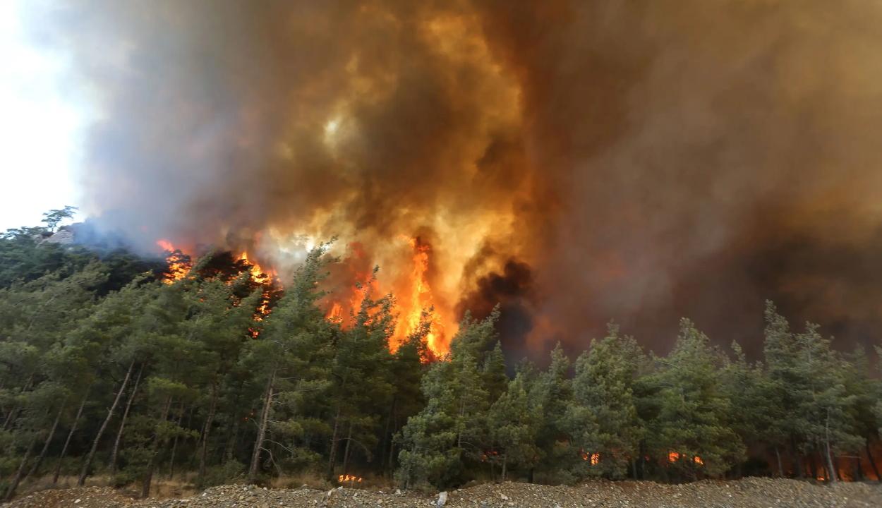 Az EU repülőgépekkel segíti a törökországi erdő- és bozóttüzek oltását