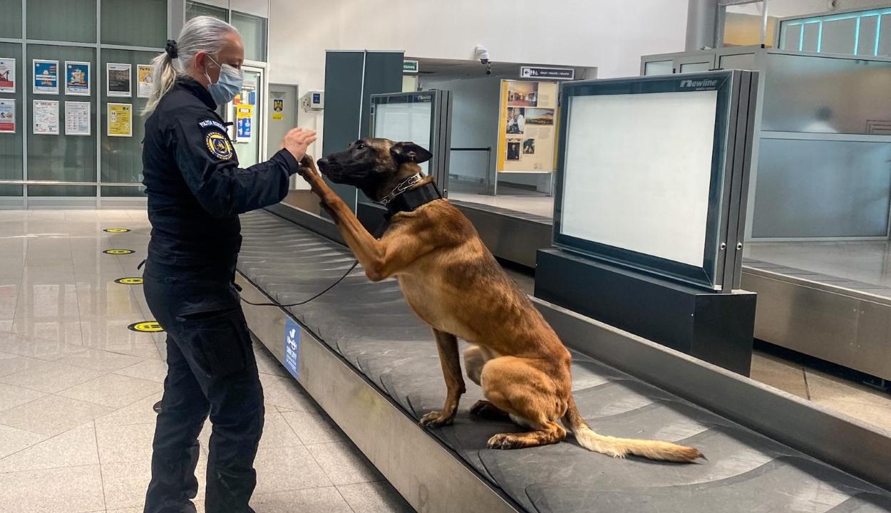 Három fertőzésgyanús utast szimatolt ki egy rendőrkutya a nagyszebeni repülőtéren