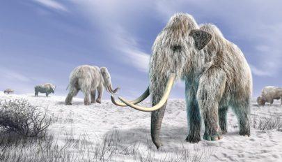Feltámasztanák a kihalt gyapjas mamutot
