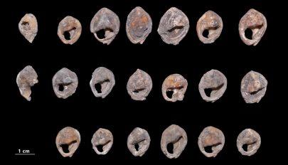A világ legrégebbi ismert kagylógyöngyeire bukkantak egy marokkói barlangban