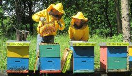 """Egyre nagyobb az érdeklődés az egyetlen horvátországi """"méhhotel"""" iránt"""