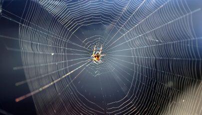 Ha több pókot lát mostanság az otthonában, az nem a véletlen műve