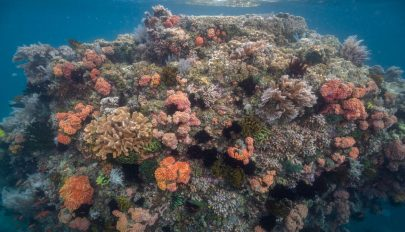 """Az """"óceán Amazonasára"""" bukkantak a Fülöp-szigetek térségében"""